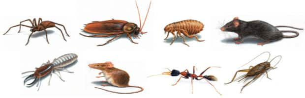 Pest control in Atlantic Seaboard